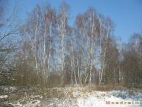 drzewokrzew_237