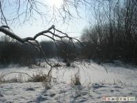 drzewokrzew_238