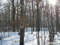 drzewokrzew_240