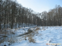 drzewokrzew_250