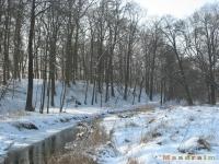 drzewokrzew_251