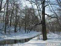 drzewokrzew_252