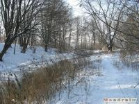 drzewokrzew_253