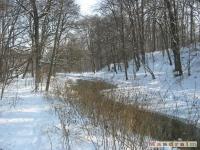 drzewokrzew_254