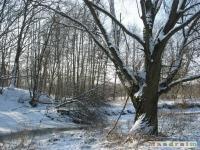 drzewokrzew_255
