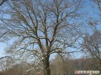 drzewokrzew_257