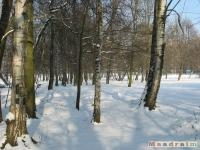 drzewokrzew_262