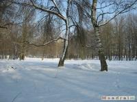 drzewokrzew_263