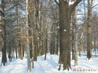 drzewokrzew_265