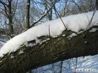 drzewokrzew_267