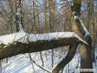 drzewokrzew_268