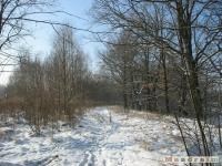 drzewokrzew_269