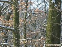 drzewokrzew_272
