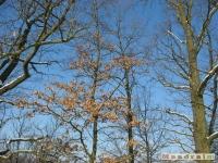 drzewokrzew_275