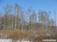 drzewokrzew_279