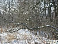 drzewokrzew_280