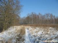 drzewokrzew_281