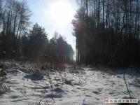drzewokrzew_286