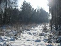 drzewokrzew_287