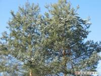 drzewokrzew_288