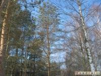 drzewokrzew_296
