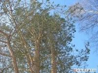drzewokrzew_297