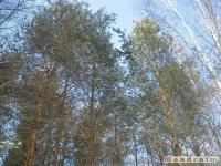 drzewokrzew_298