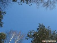 drzewokrzew_299