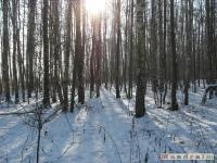 drzewokrzew_302