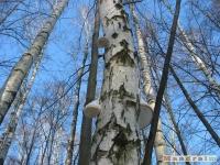 drzewokrzew_303