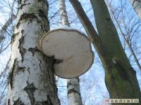 drzewokrzew_304