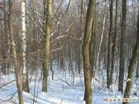 drzewokrzew_305
