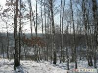 drzewokrzew_306