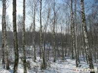 drzewokrzew_307
