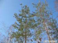 drzewokrzew_308