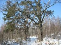 drzewokrzew_313