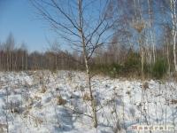 drzewokrzew_320