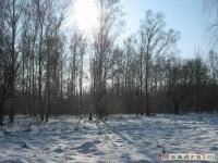 drzewokrzew_321