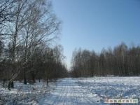 drzewokrzew_322