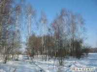 drzewokrzew_323