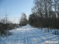 drzewokrzew_325