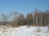 drzewokrzew_326