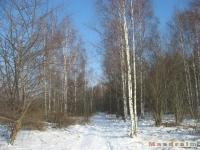 drzewokrzew_327