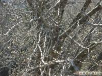 drzewokrzew_328