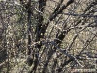 drzewokrzew_329