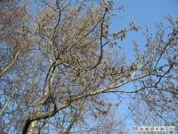 drzewokrzew_332