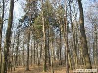 drzewokrzew_334