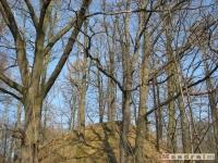 drzewokrzew_335