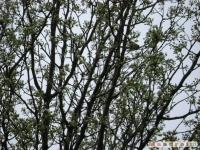 drzewokrzew_336