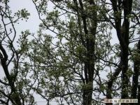drzewokrzew_338